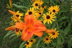Dag Lillies en Gele Madeliefjes Stock Foto