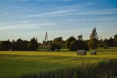 Dag op landbouwbedrijfgebied stock foto's