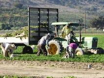 Dagarbetare i fälten av Carpinteria i Ventura County, Kalifornien royaltyfri bild
