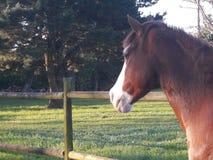 Dagdrömma hästen Royaltyfri Bild