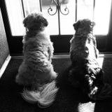 Dagdromen van een hond Stock Afbeeldingen