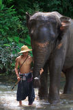 Dagelijks olifantenbad Stock Foto