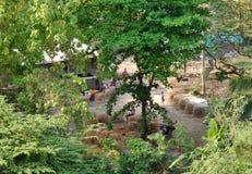 Dagelijkse activiteit in binnenplaatstuin Stock Foto