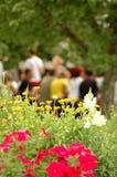 Dagen 2 van de zomer stock foto's