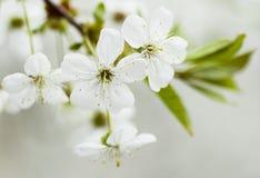 dagen blommar fjädern Royaltyfri Fotografi