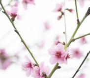 dagen blommar fjädern Royaltyfri Bild