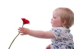 dagen blommar mödrar till Royaltyfri Bild