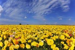 dagen fields den storartade fjädern för blommor Royaltyfri Bild