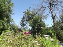 Dagen i trädgården är solig Fotografering för Bildbyråer