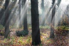 Dagen met mist in het park Royalty-vrije Stock Afbeeldingen