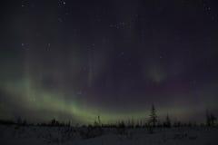 Dageraad in Siberische taiga Stock Afbeeldingen