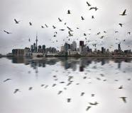 Dagfoto's van Toronto Ontario stock foto's