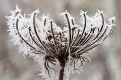 dagfrosthoar planterar slapp vinter för rime Arkivfoto