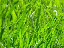 Dagg är på ett gräs royaltyfria foton