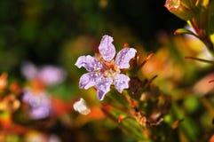 Dagg och blomma Arkivbilder