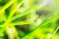 Dagg på det gröna gräset Royaltyfri Bild
