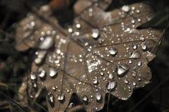 Dagg på en leaf Royaltyfria Bilder