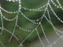 Dagg på en spindelnät Royaltyfri Foto