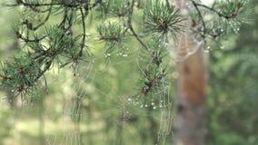 Dagg på en spindelrengöringsduk lager videofilmer