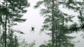 Dagg på en spindelrengöringsduk stock video