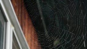 Dagg på en spindelrengöringsduk på fönstret av ett trähus lager videofilmer