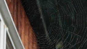 Dagg på en spindelrengöringsduk på fönstret av ett trähus arkivfilmer