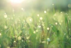 Dagg på gräs royaltyfria foton