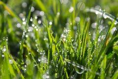 Dagg på gräs Royaltyfri Fotografi