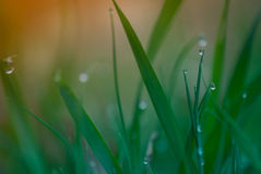 Dagg på gräs fotografering för bildbyråer