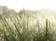 Dagg på gräs på en regnig morgon med solljus Royaltyfria Bilder