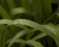 Dagg på gräsblad Arkivfoto