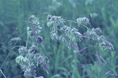 Dagg på gräset Royaltyfri Bild