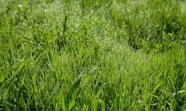 Dagg på gräset i morgon Arkivfoton