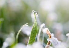 Dagg på gräset med rimfrost Arkivbild