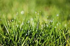 Dagg på gräset på soluppgång royaltyfria bilder