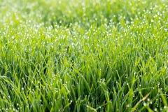 Dagg på grässtrån Royaltyfri Fotografi