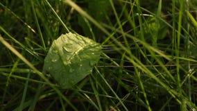 Dagg på grönt gräs i vår på en suddig bakgrundsnärbild natur med vattendroppar efter regn i makro lager videofilmer
