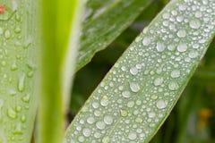 Dagg på leafen Royaltyfria Foton