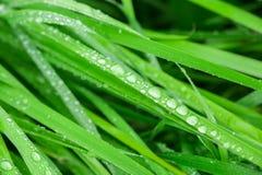 Dagg på nytt grönt gräs Top beskådar Arkivfoto