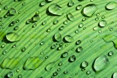 Dagg på sidor efter regn med morgonljus Arkivbild