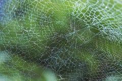 Dagg på spindelrengöringsduk Royaltyfri Bild