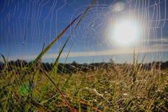 Dagg på spindelrengöringsduk Royaltyfri Fotografi