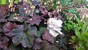 Dagg-täckt purpurfärgad Astilbe med vit feträdgårdskulptur Royaltyfria Bilder