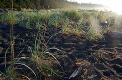 Dagg täckte strandgräs i ljust morgonljus Arkivbild