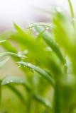 dagg tappar den gröna växten Royaltyfria Foton