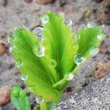 dagg tappar den gr?na leafen arkivfoto