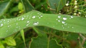 dagg tappar leafen fotografering för bildbyråer