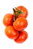 dagg tappar nya tomater Royaltyfri Foto