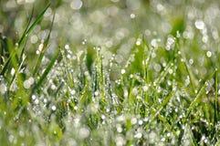 Dagg tappar på grönt gräs Fotografering för Bildbyråer