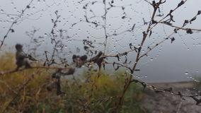 dagg tappar spindelrengöringsduk arkivfilmer